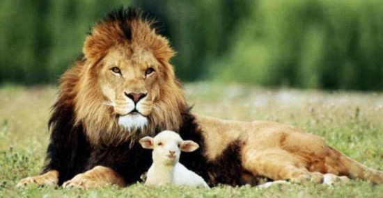 831_lion-and-the-lamb.jpg